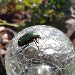 Beetle on the Glas Sphere