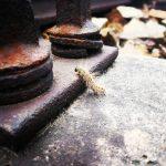 Гусеница на ржавом рельсе