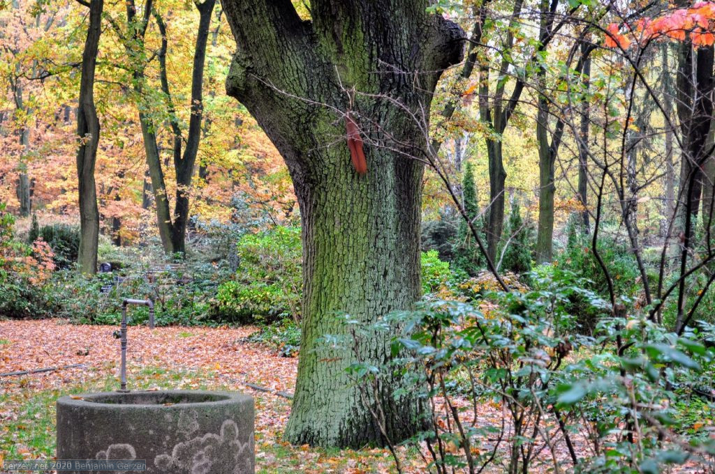 A squirrel climbing on the Tree in the garden cemetery Marzahn